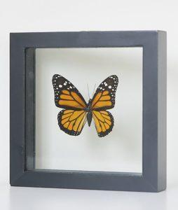 Stuffed butterfly in danaus plexippus list