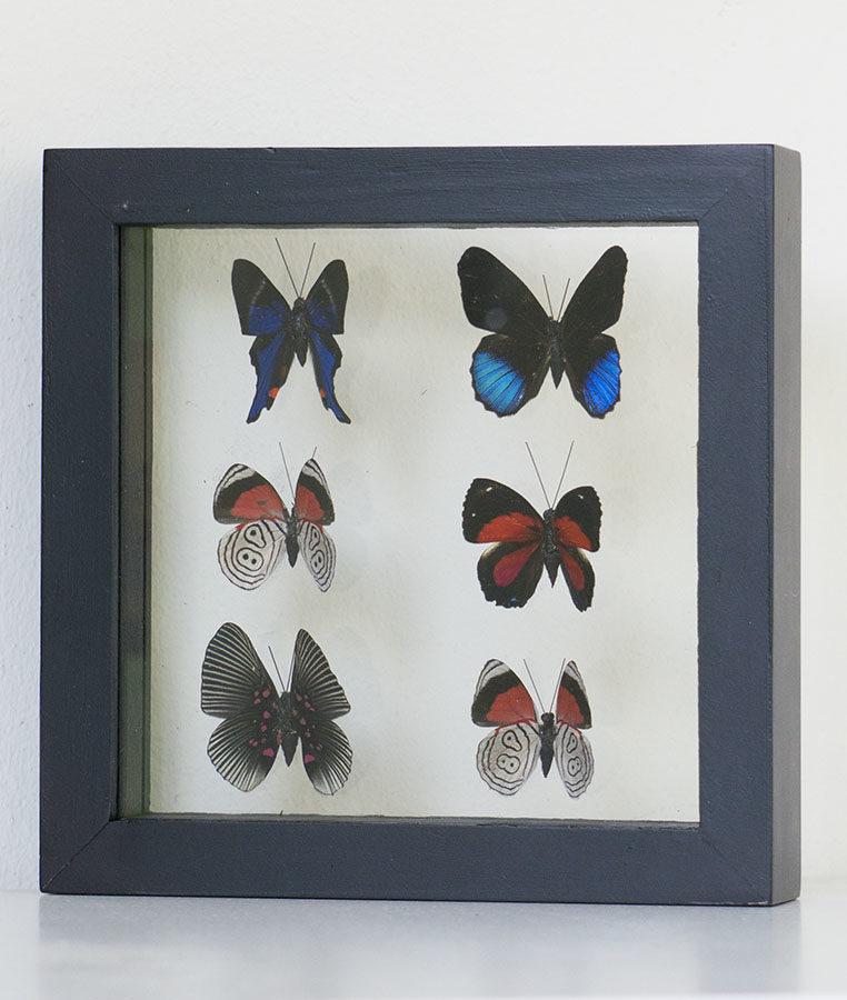 Six stuffed butterflies in frame