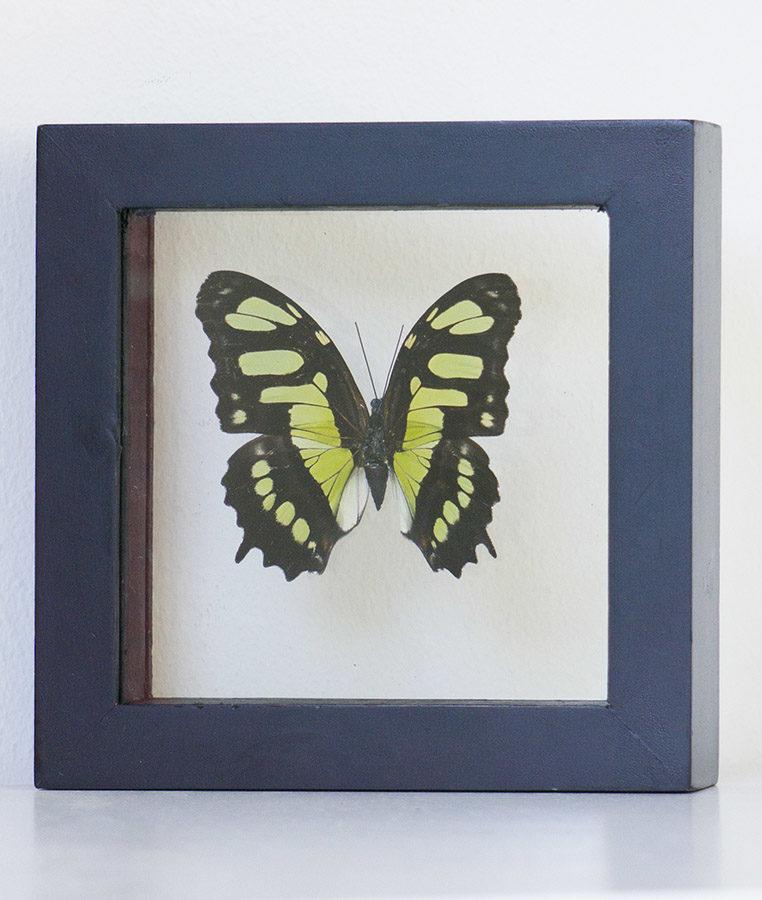 Stuffed butterfly in list Victorina Stelenes