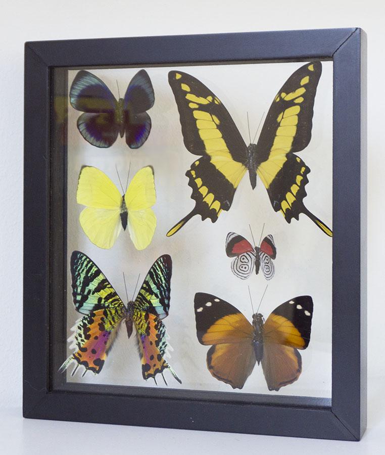 butterflies in table